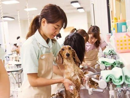 北海道どうぶつ・医療専門学校の画像1