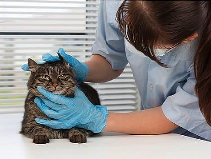 非公開求人:動物看護師募集【正社員】【東京都北区】a0b7F000000OTkJQAW_2画像