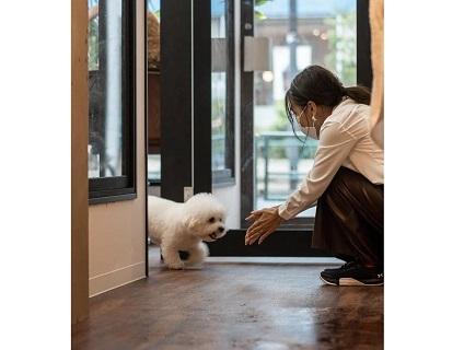 DOG RESORT WANLIFEの画像1