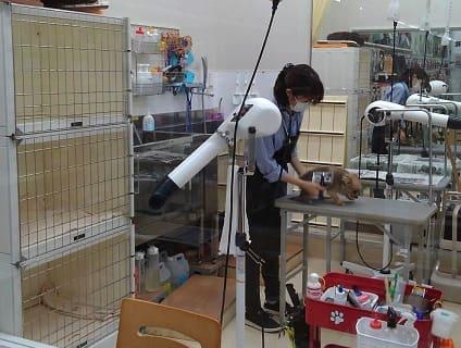 『ペットアミ中野店』ショップ店員さんを募集中![アルバイト・パート][長野県中野市]No.110_b画像