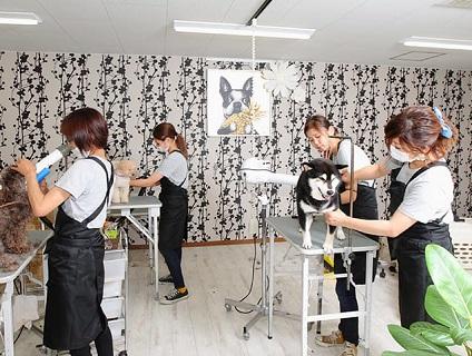 【dog salon Qoo狭山店/トリマー募集(正社員)/大阪府大阪狭山市】No.107_b画像