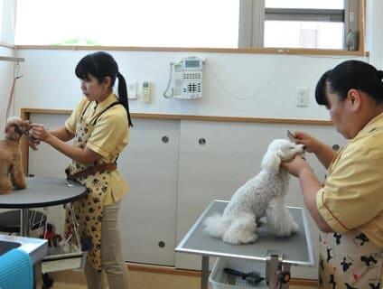 有限会社ワイズベット/新習志野どうぶつ病院の画像