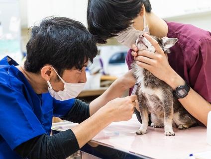 クロス動物医療センター麻布台の画像1