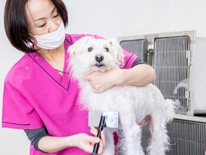 深志動物病院の画像1