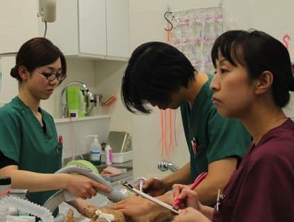 【イオンペット(動物病院)】動物看護師さん募集中!!【アルバイト・パート】【神奈川県エリア】画像