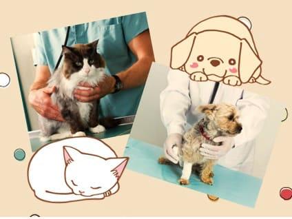 やはぎ動物病院の画像