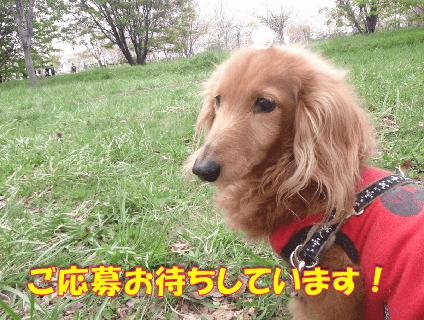 [TOUTOU VIVANT]トリマー(正社員)大募集中!![大阪府吹田市]No.314_d画像