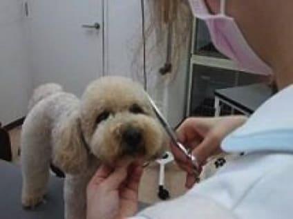 動物病院ファミリーの画像1