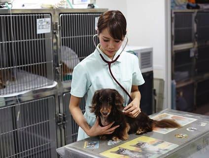 [千里桃山台動物病院]動物看護師の募集です![パート/大阪府吹田市]No.110_b画像