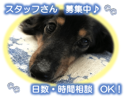 [Dog support hapiness ドッグサポート ハピネス]トリマー(アルバイト・パート)大募集中!![大阪府堺市]No.314_d画像