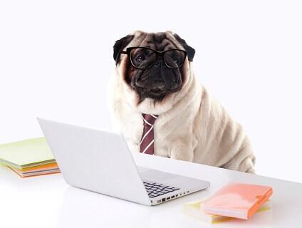 株式会社犬のしつけ教室DOGLYの画像