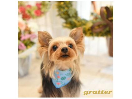 ペットホテル&トリミング gratter(グラッター)の画像1