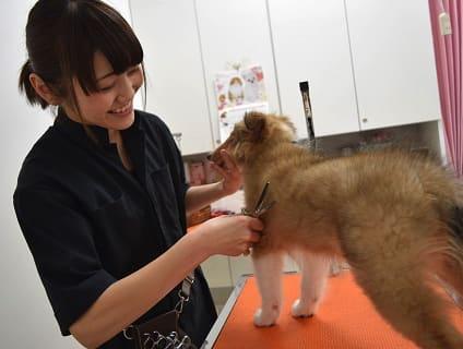 ペットの専門店コジマ ベイタウン横浜本牧店の画像