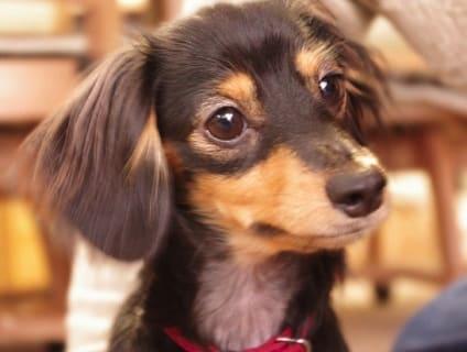非公開求人:動物看護師募集【アルバイト・パート】【奈良県奈良市】a0b7F000000OYiGQAW_3画像
