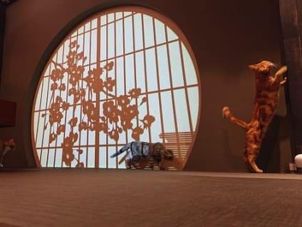 【Coo&RIKU(クーアンドリク) 秋葉原店】ショップ店員さん(アルバイト・パート)募集中♪[東京都千代田区]画像