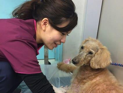[アリサ動物病院]動物看護師の募集![パート・アルバイト/神奈川県平塚市]画像