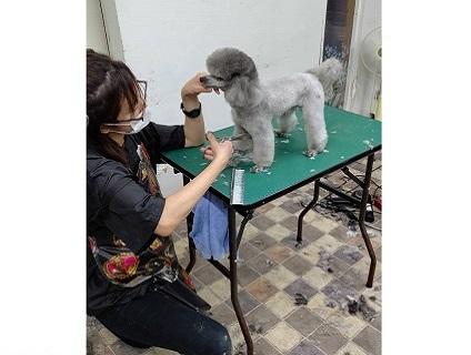 Pet Salon Daisy(ペットサロン デイジー)の画像