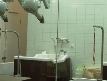 <PETLIFE 入間>トリマーの募集[正社員][埼玉県入間市]No.104_d_a0b0o00000OJL4GAAX画像