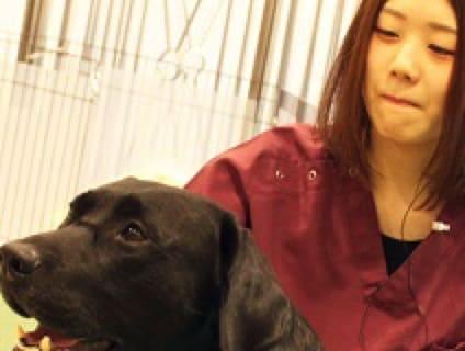 【イオンペット(動物病院)】動物看護師さん募集中!!【正社員】【京都府エリア】の画像