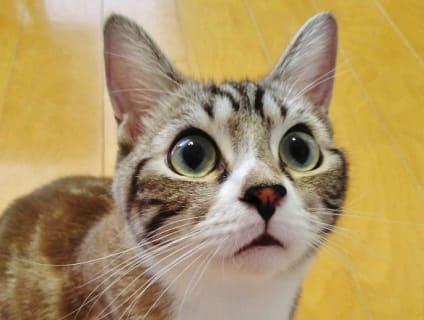 非公開求人:動物看護師募集【正社員】【宮城県白石市】a0b7F000000OZFMQA4_1画像