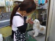 犬の床屋さん浅草3丁目の画像1