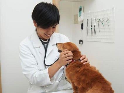 【イオン動物病院 つくば】獣医師募集中!!【アルバイト・パート】【茨城県つくば市】画像