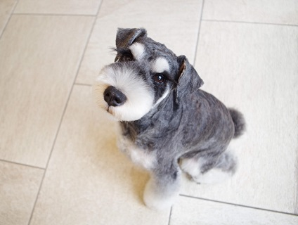 【Doggie-Do 麻布店/トリマー募集(アルバイト・パート)/東京都港区】No.107_b画像