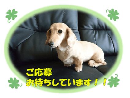 ドッグスパ・サロン・アクアマリン 代々木公園店の画像