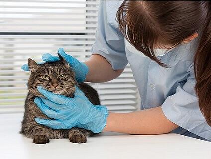 根岸犬猫動物病院の画像1