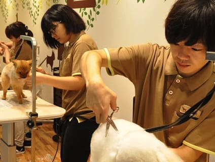 イオンペット ビューティサロン春日井店の画像1
