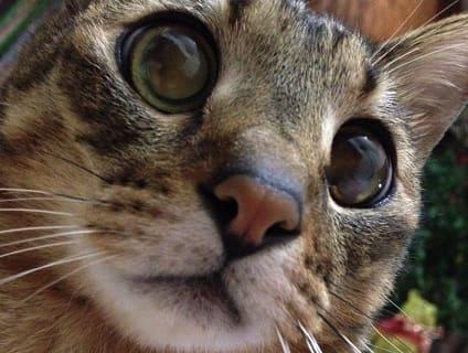 非公開求人:動物看護師募集【正社員】【兵庫県尼崎市】a0b7F000000OXWLQA4_3画像