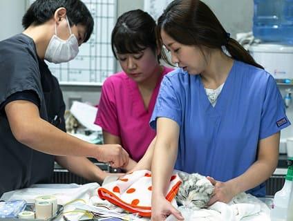 〔辻堂犬猫病院〕◆動物看護師募集中◆正社員◆神奈川県藤沢市◆の画像