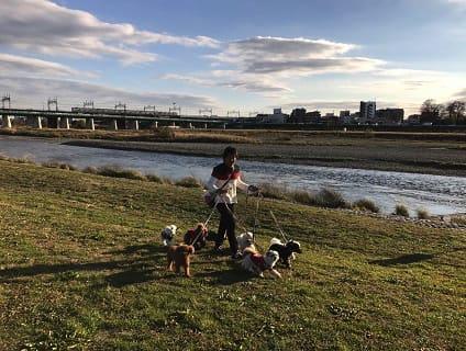 [Peace Dogs furi furi]トリマー(正社員)大募集中!![東京都世田谷区]No.314_d画像