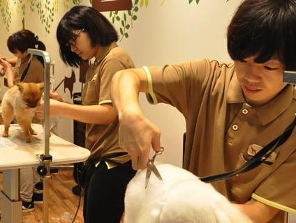 イオンペット ビューティサロン千葉ニュータウン店の画像