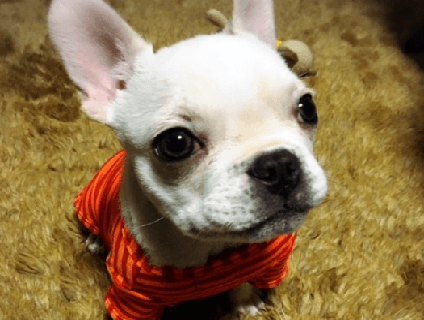 [Dog salon Nap]トリマー(アルバイト・パート)大募集中!![群馬県伊勢崎市]No.314_d 画像