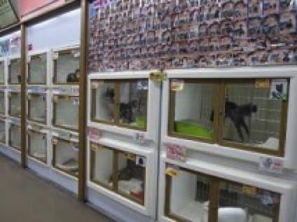 ペットステーションハセガワビバホームあすみが丘店/有限会社エクセレントペットの画像