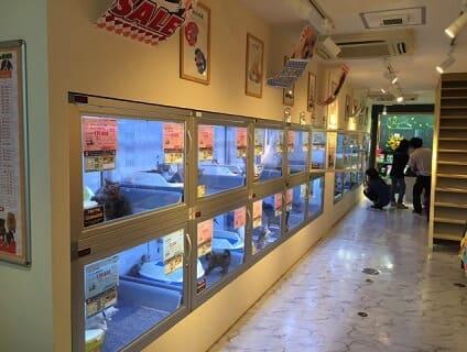 【Coo&RIKU(クーアンドリク) 下北沢店】ショップ店員さん(アルバイト・パート)募集中♪[東京都世田谷区]画像