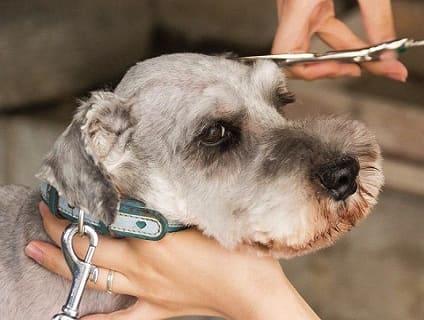 [dog salon CALM]トリマー(正社員)大募集中!![茨城県古河市]No.314_d 画像