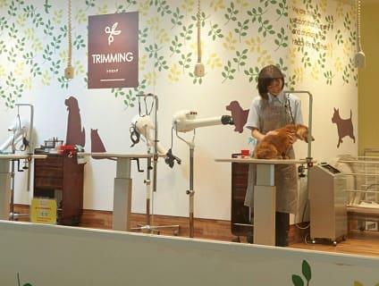 イオンペット ビューティサロン新潟青山店の画像