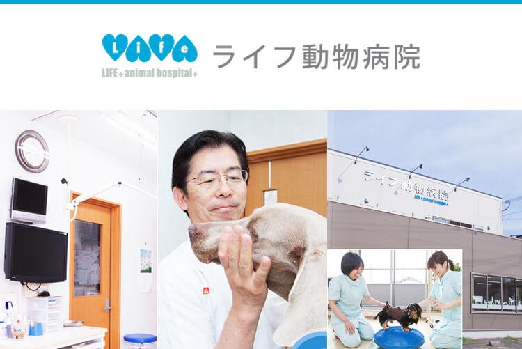 ライフ動物病院の動物看護師求人画像