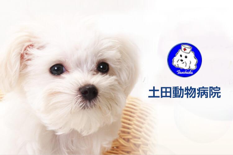 [土田動物病院]トリマー兼動物看護師さん(正社員)を募集!画像