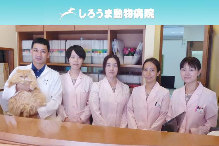 しろうま動物病院の動物看護師募集(正社員)画像
