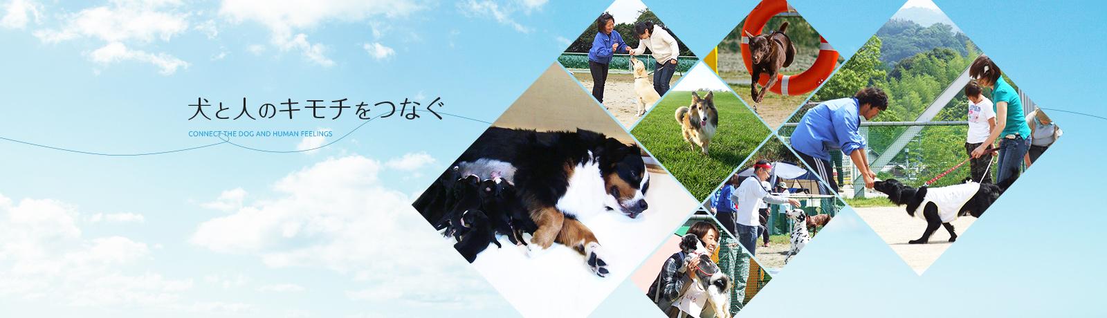 有限会社 関空ペットの獣医師募集(アルバイト・パート)画像
