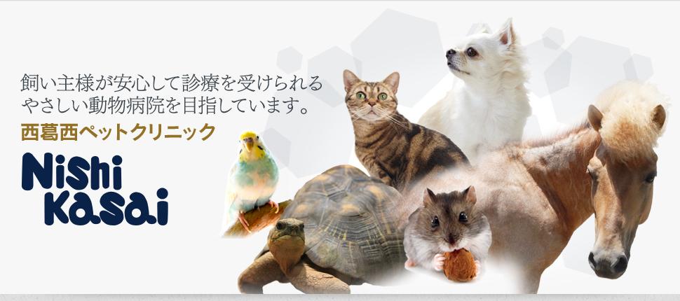 ◇◆◇動物看護師(パート・アルバイト)募集◇◆◇前向きに取り組む姿勢があり、積極性のある方を歓迎いたします。画像