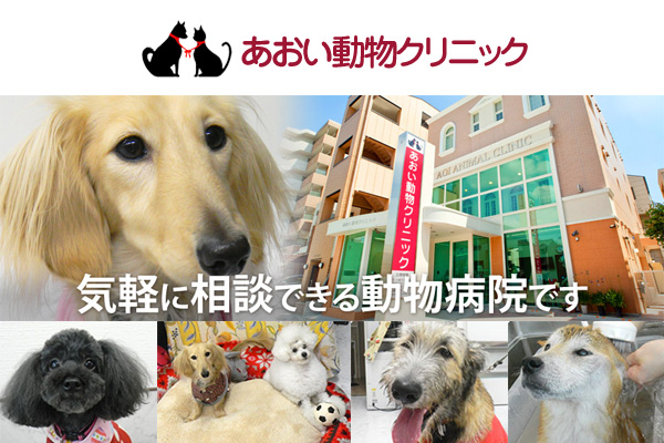 [東区]あおい動物クリニックの動物看護師募集(正社員)画像