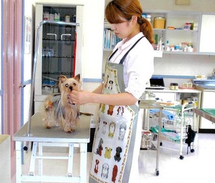 【急募】川井動物病院でトリマー兼動物看護師(正社員)のスタッフ募集*☆*画像