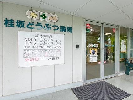 分院『桂坂どうぶつ病院』での院長候補募集中です!の画像