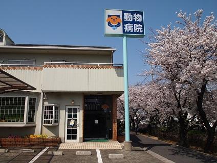 塩田動物病院で動物病院スタッフさんの募集☆正社員☆画像