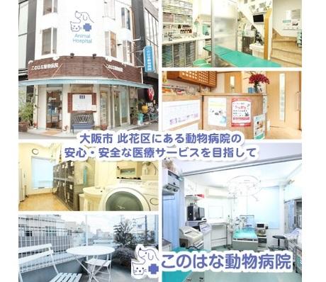 モコ動物病院併設ハラ犬猫美容室 犬、猫の治療、 …